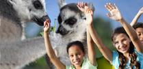 Hotels vlakbij attractiepark/dierentuin